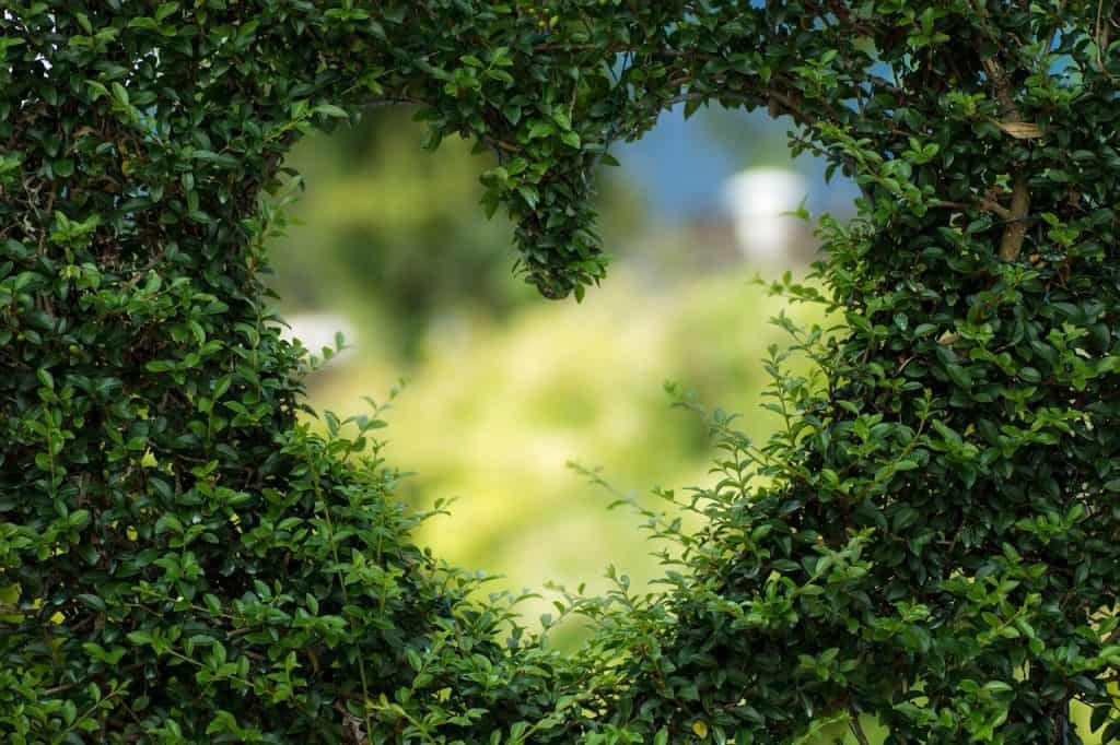 heart-love-green