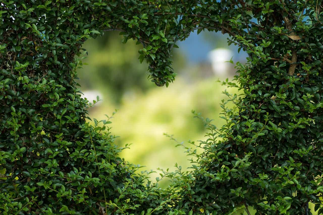 heart-love-green