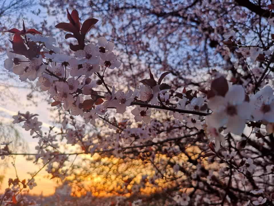 niceeee-tree-flowers