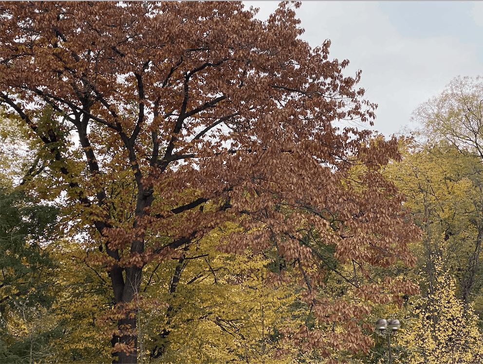 autumn-energy