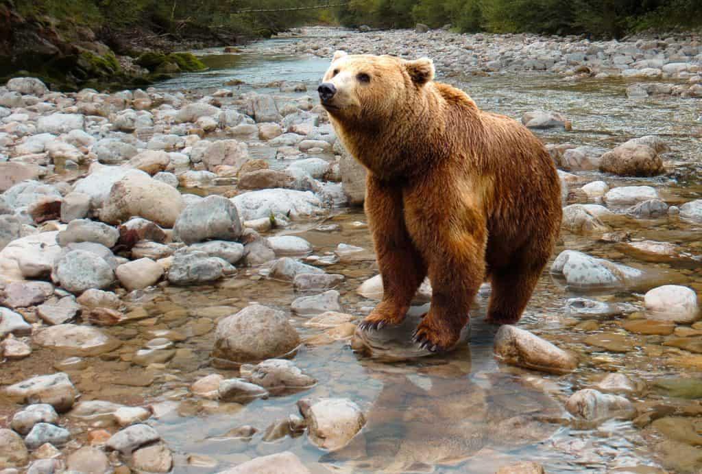 bear-symbolism
