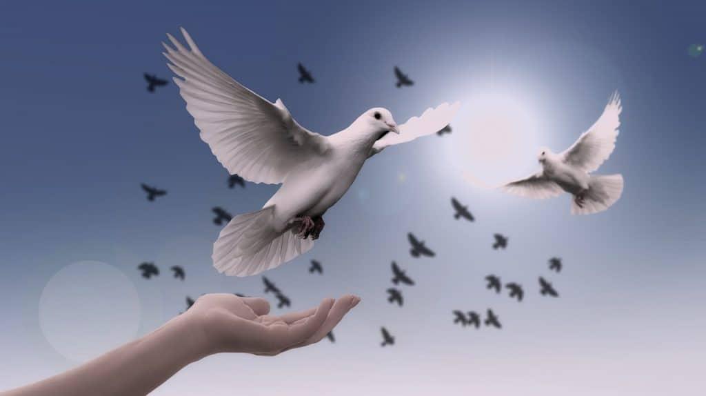 dove-spirit-animal