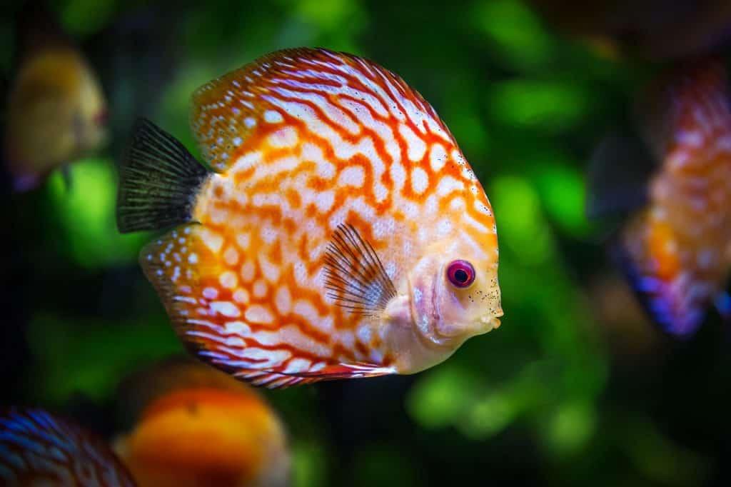 fish-spirit-animal