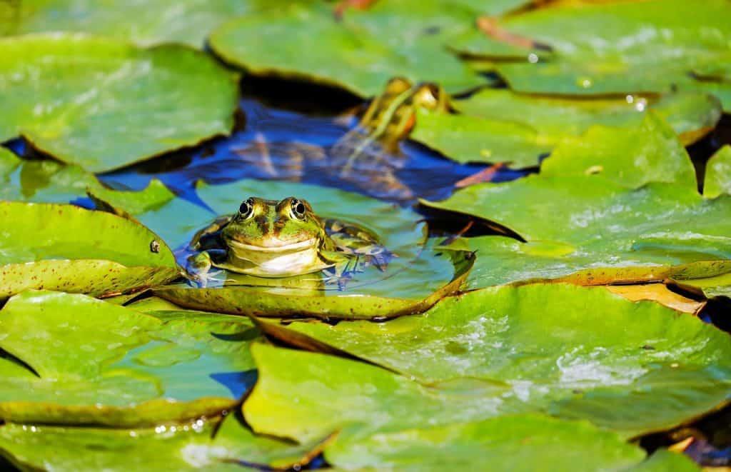 frog-spirit-animal