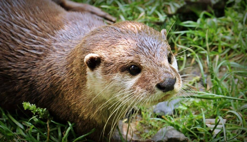 otter-spirit-animal0