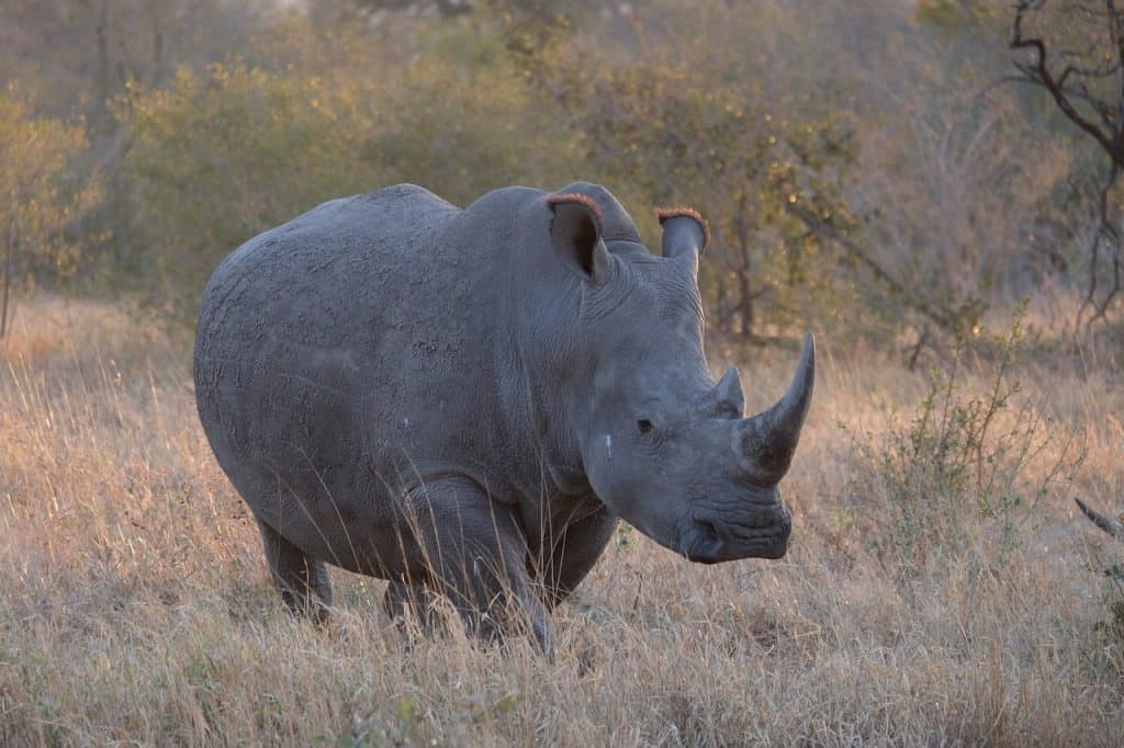 rhino-spirit-animal