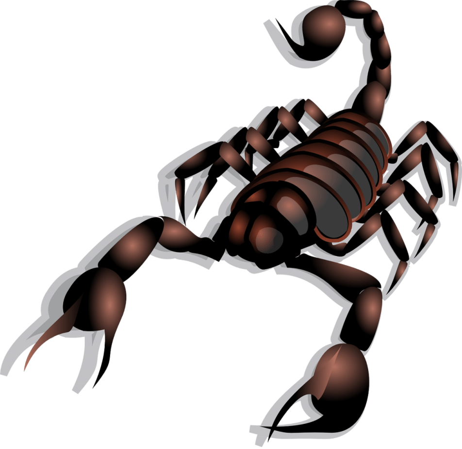 The SCORPION SPIRIT ANIMAL Ultimate Guide (Meanings