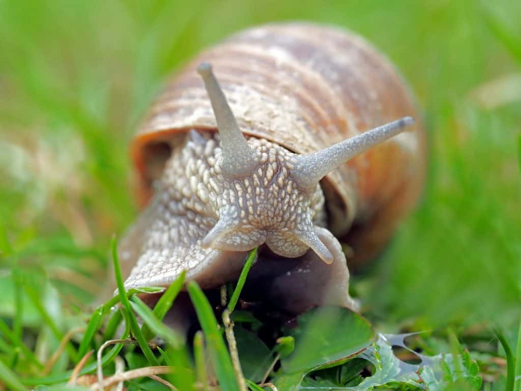 snail-spirit-animal