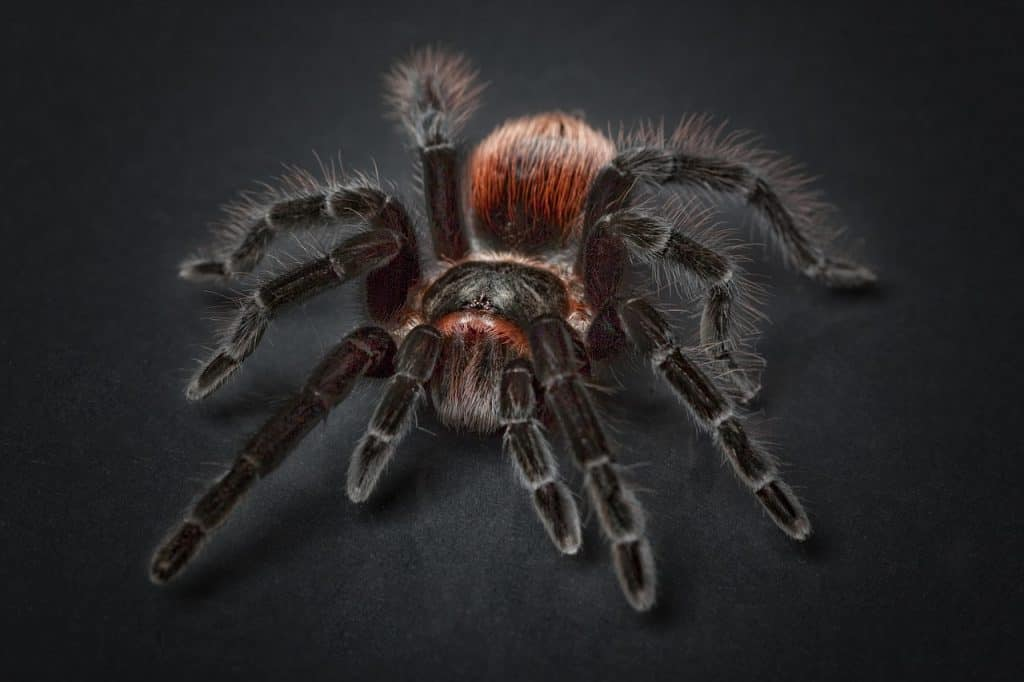 spider-spirit-animal