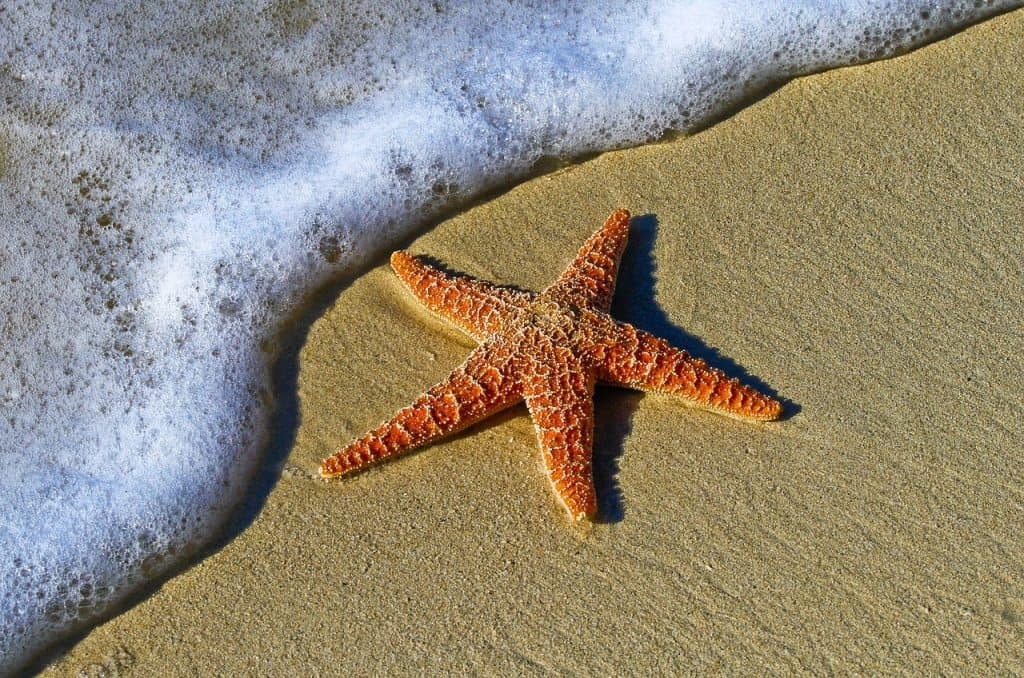 The STARFISH SPIRIT ANIMAL Ultimate Guide (Meanings & Symbolism)