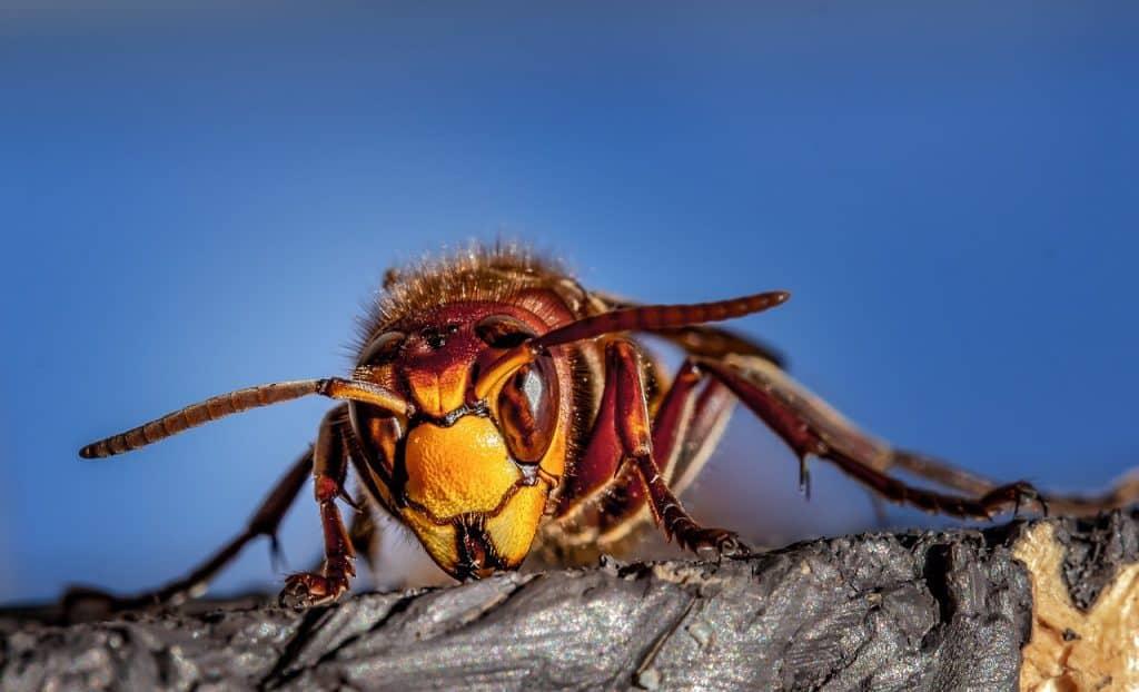wasp-spirit-animal