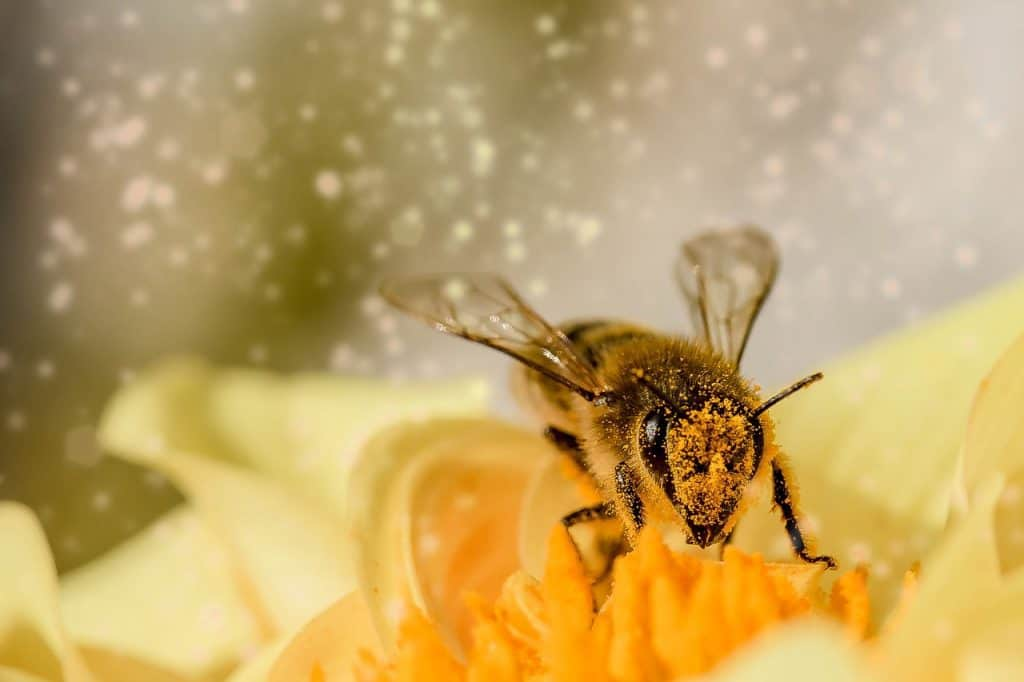 bee-dream-interpretation