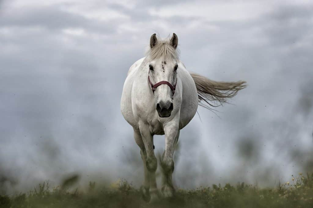 horse-dream-meaning