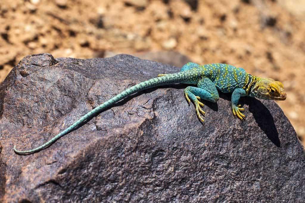 lizard-dream-meaning