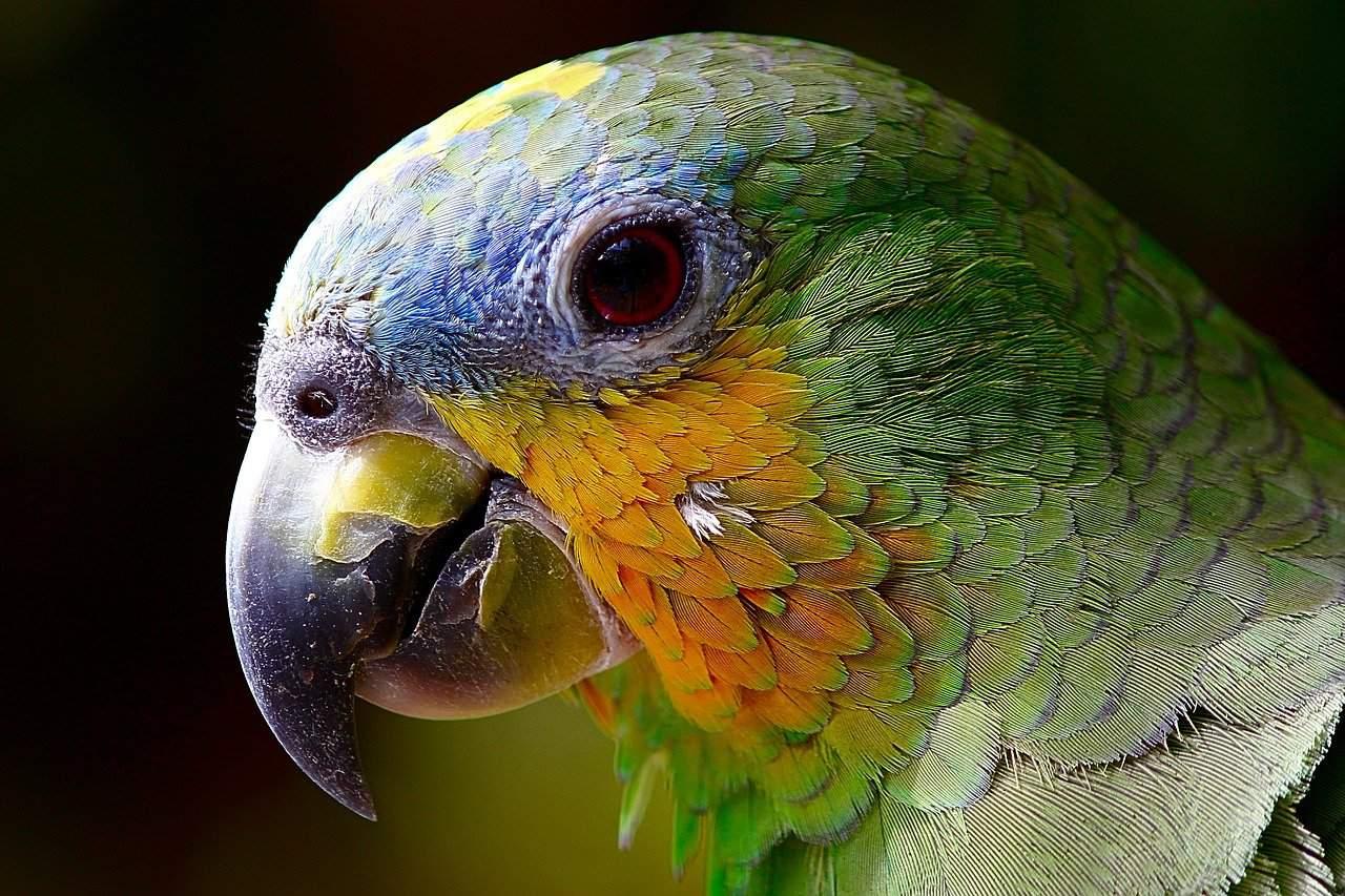 parrot-spirit-animal