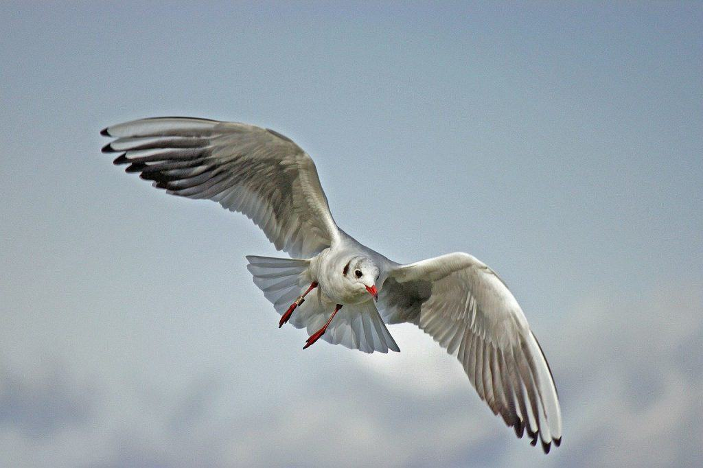 seagull-spirit-animal
