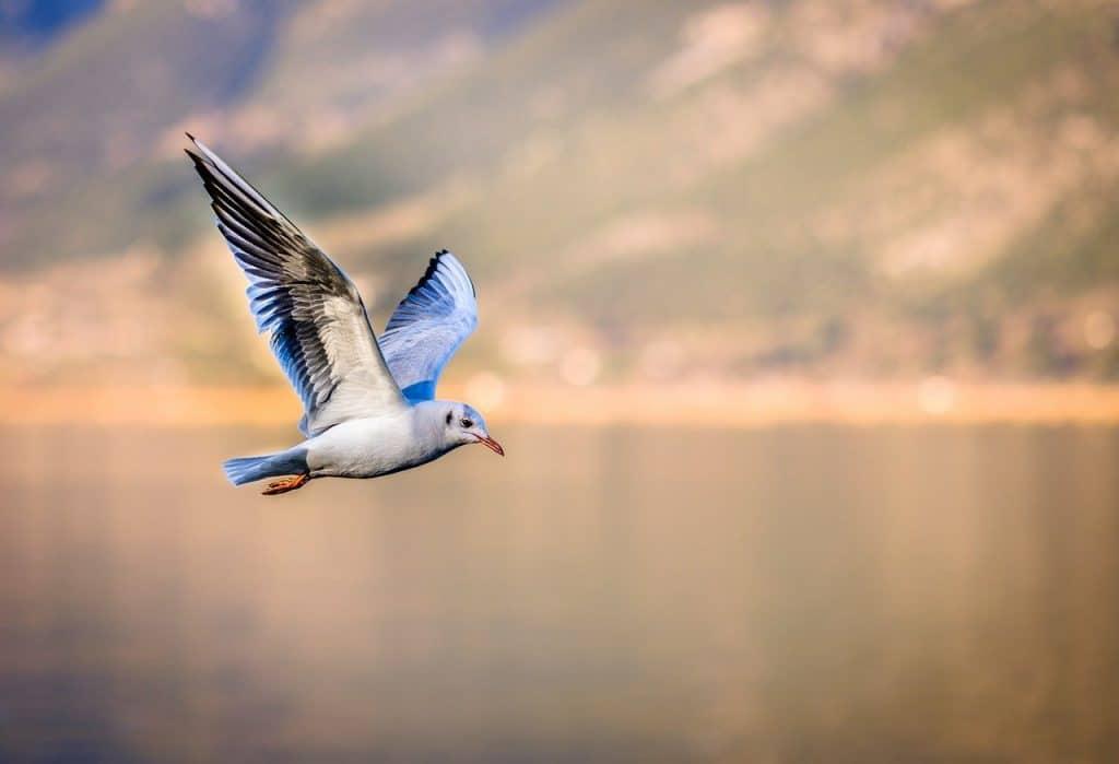 seagull-symbolism