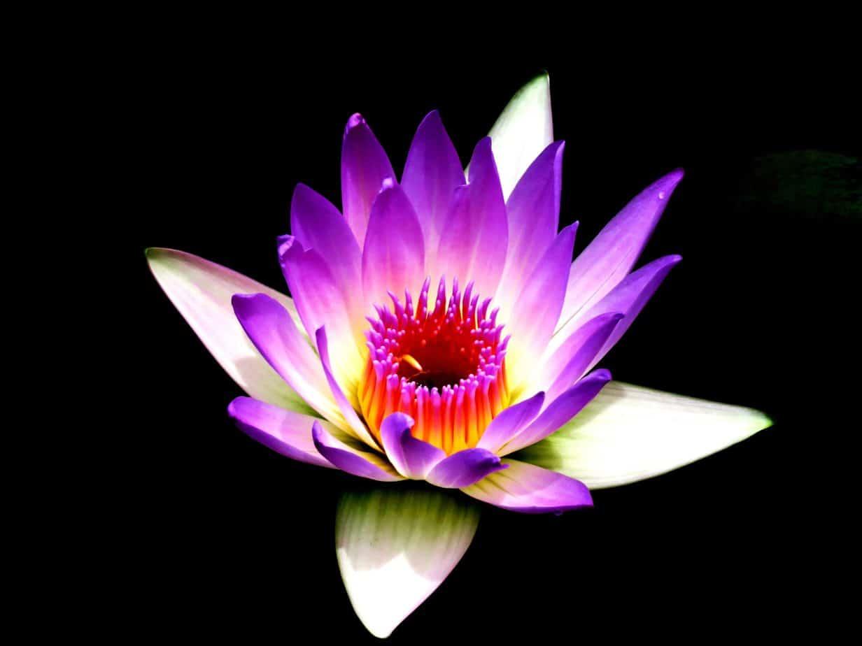 spiritual-flower
