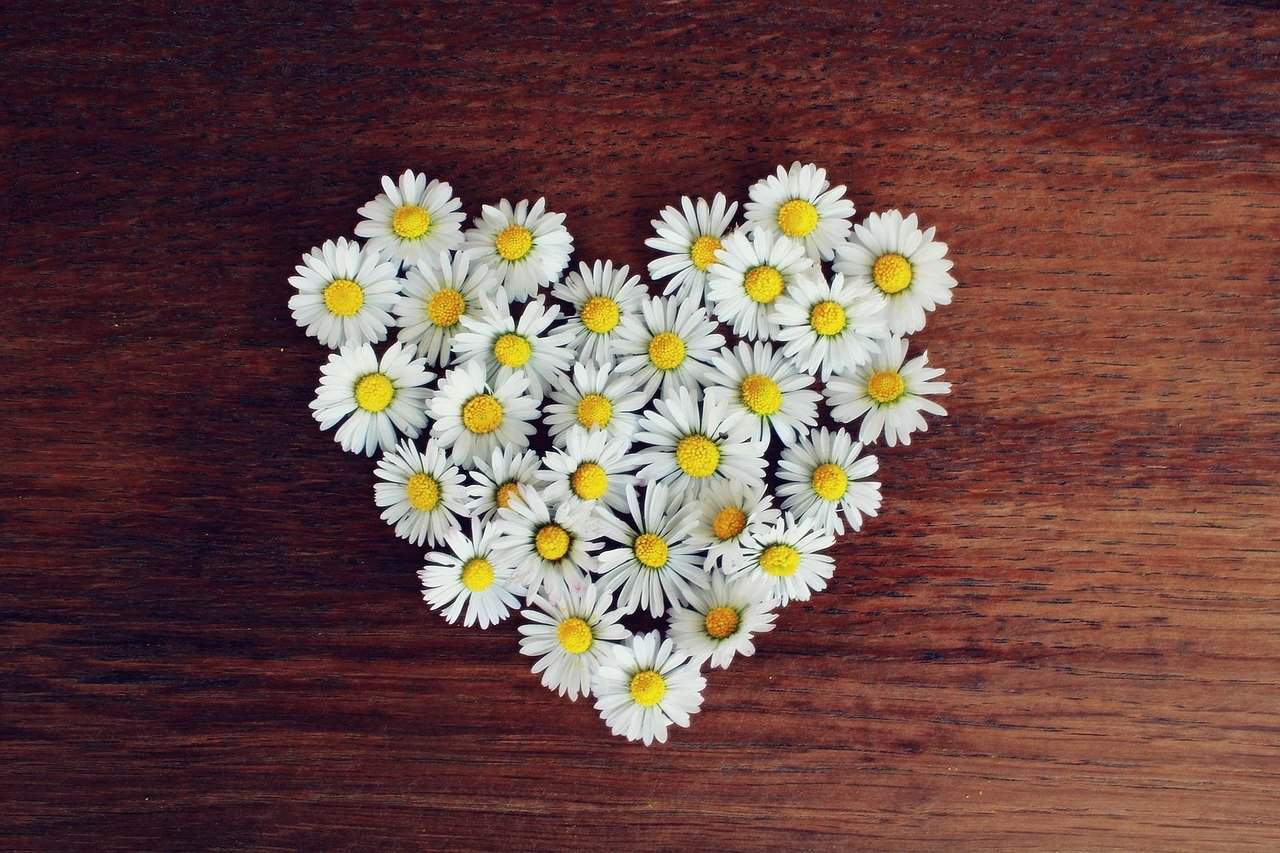 heart-of-daisies